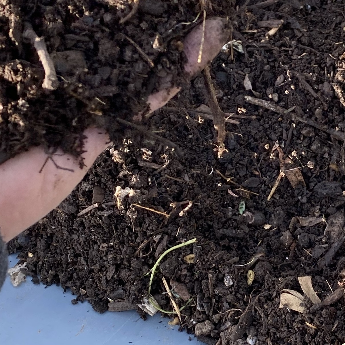 very dark homemade compost!