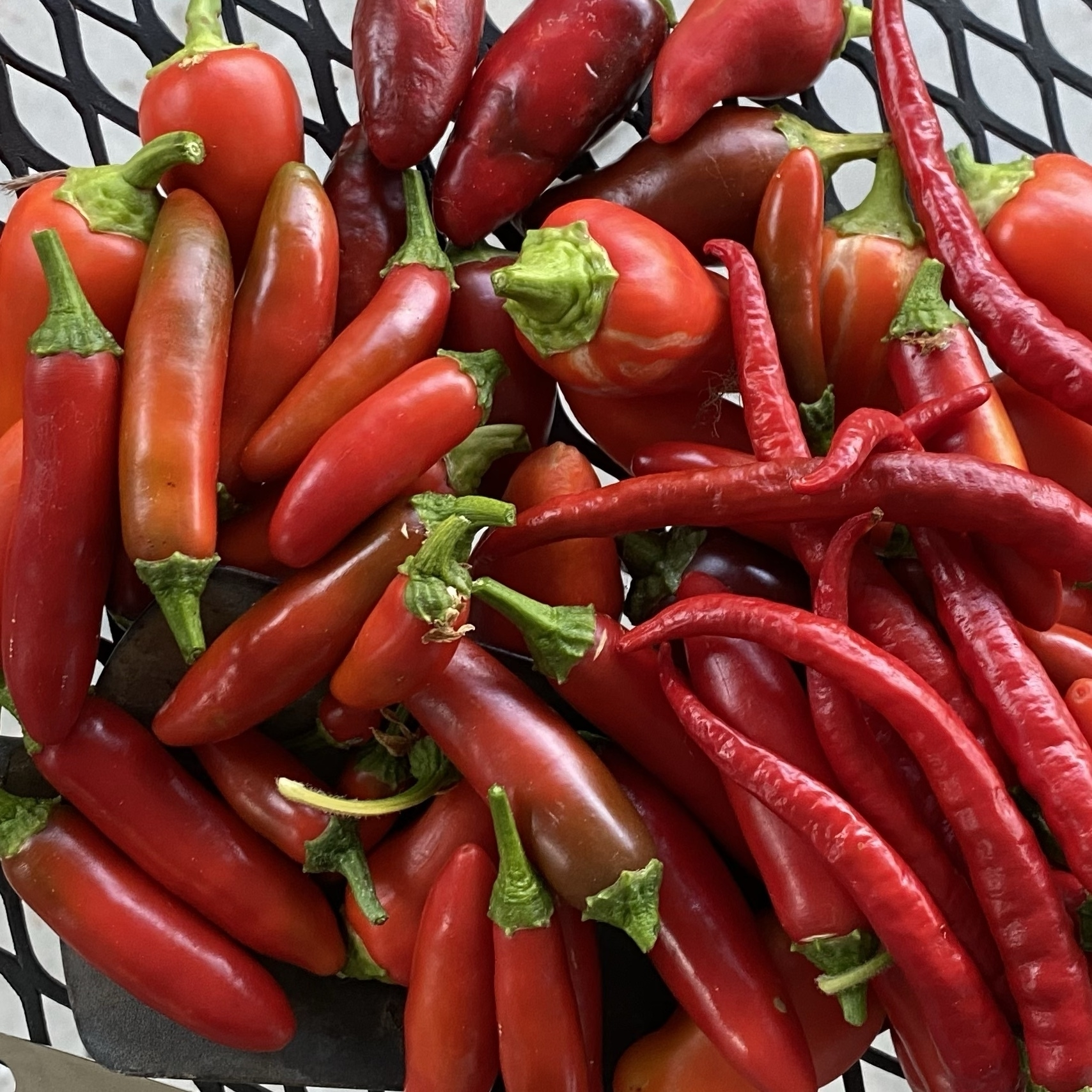 a pile of ripe peppers of various kinds