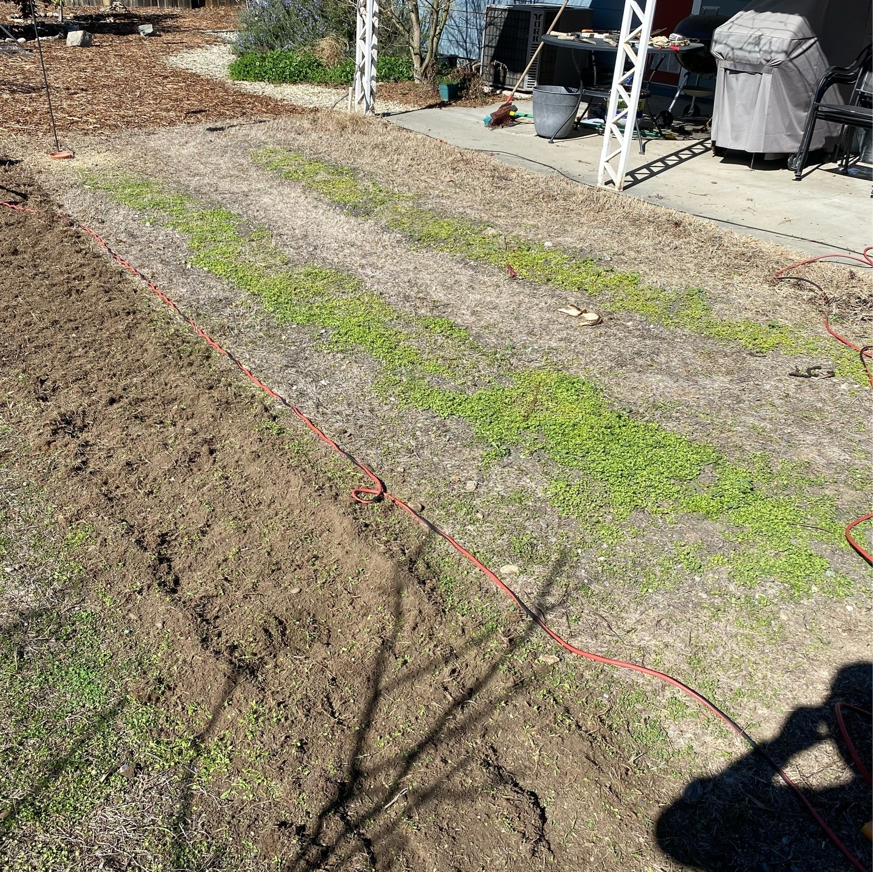 before most of the lawn removal, showing three garden rows but not yet prepared